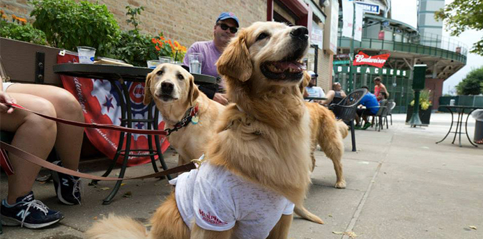 9 Dog-Friendly Restaurants in Chicago: Murphy's Bleachers