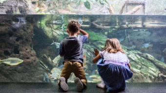 chicago museums: Shedd Aquarium